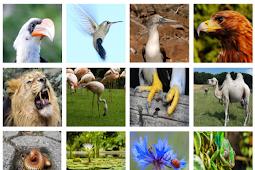 Pengertian Adaptasi Morfologi Menurut Para Ahli Dan Contoh Lengkap