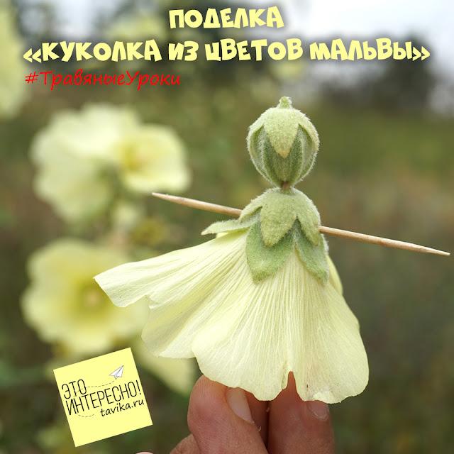 куколка из цветка мальвы - детская поделка