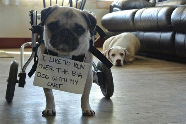 Dog Shaming Collection Silly Bunt Funny