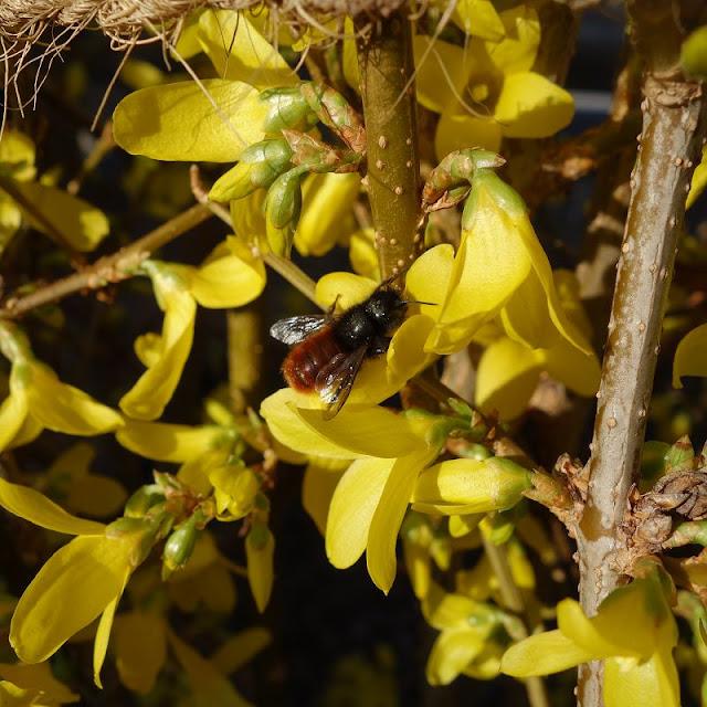 fruehling, fruehling bilder, fruehlingsbeginn, fruehlingsblumen, fruehlingserwachen, garten, garten im fruehling, garten im fruehling bilder, insektenhotel, insektenhotel groß, insektenhotel bewohner, insektenhotel bewohner bilder, wildbienen, wildbienen bilder, wildbienen ansiedeln, diy blog,
