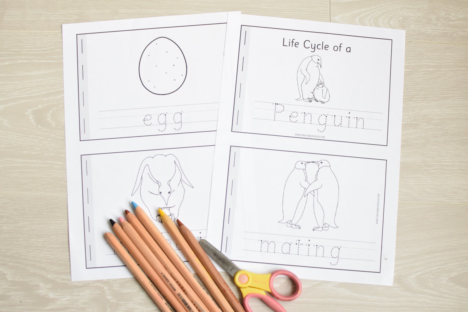 Life Cycle Learning Activity Packs
