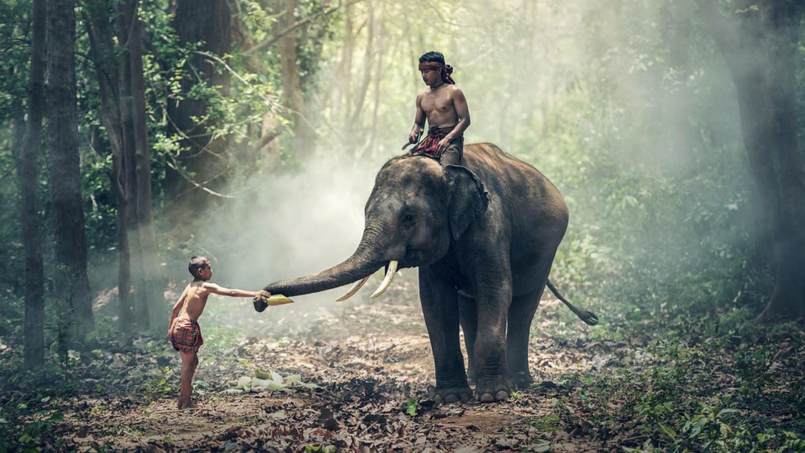 Indischer Elefant in Indien