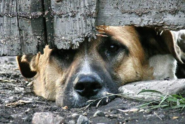 Armenia avanza convertir el maltrato animal en un delito