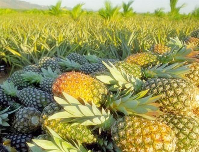 Laranja e abacaxi são os alimentos de maior risco por agrotóxico, diz Anvisa