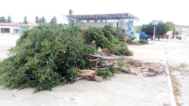 Construção de muro  e derrubada de árvores em torno da igreja católica em Olho D'Água do Casado deixa moradores revoltados