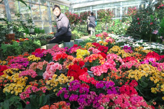 Camellia Hill Jeju
