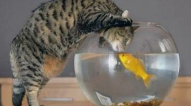 17 Arti Mimpi Melihat Kucing Makan Ikan Asin Menurut Primbon Jawa Terlengkap