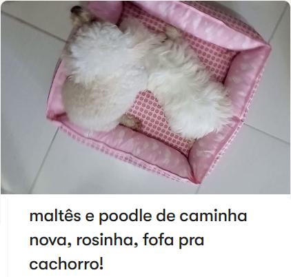 maltês e poodle de caminha nova, rosinha, fofa pra cachorro!