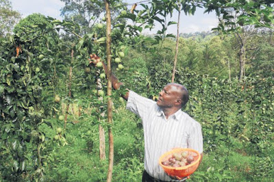 passion fruit farming in Kenya earnings
