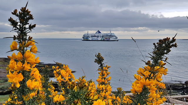 A BC Ferry approaches Active Pass on its way to Vancouver Island.