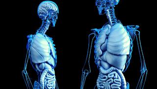 MCQs on Endocrine System
