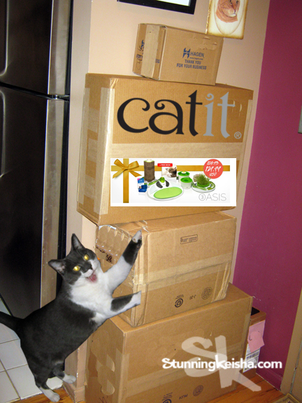 Psst, Wanna Win A Catit Oasis 2.0 Kit?