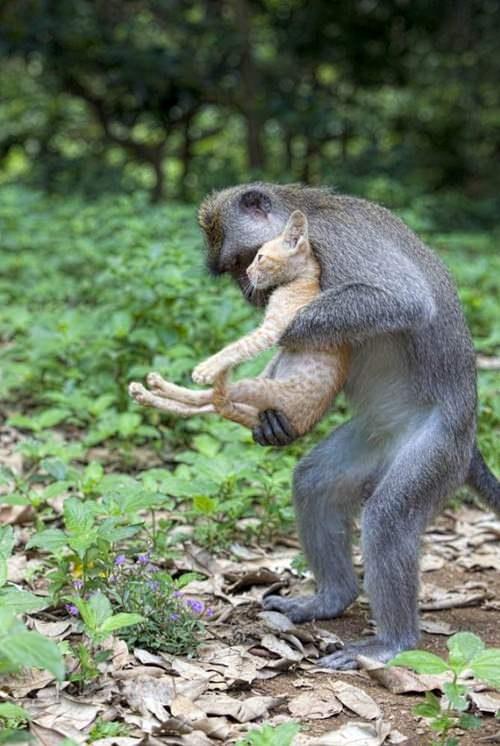 love animals monkey in - photo #11