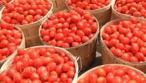 Tomatoes at Kongowea Market. PHOTO | BMS