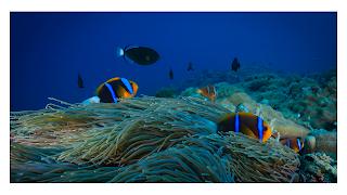 keindahan bawah laut palau