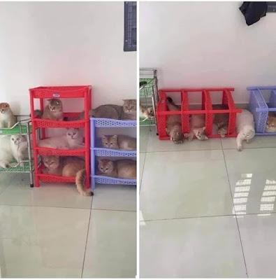 Witzige Katzen im Schuhschrank umgeworfen