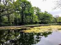 Bushy Park - Dublin