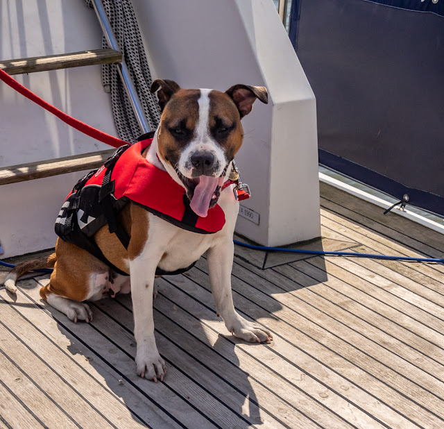 Photo of Ruby on Ravensdale's aft deck on the Solway Firth