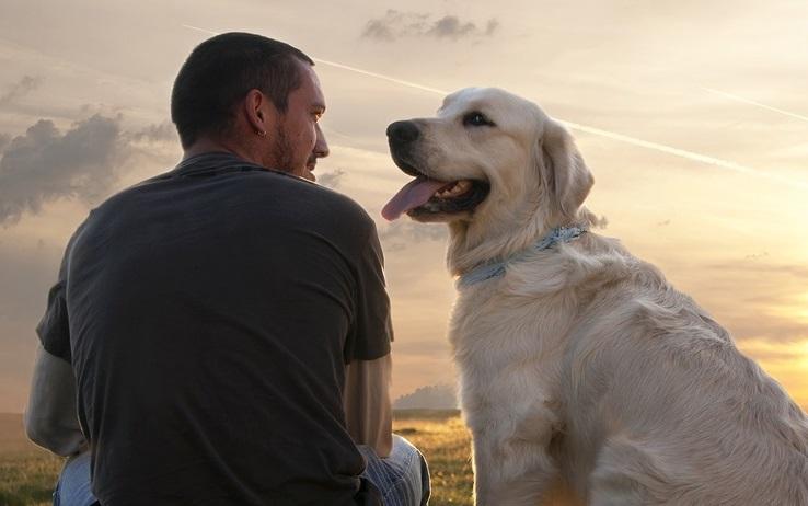 investigacion-revela-por-que-los-perros-son-realmente-el-mejor-amigo-del-hombre
