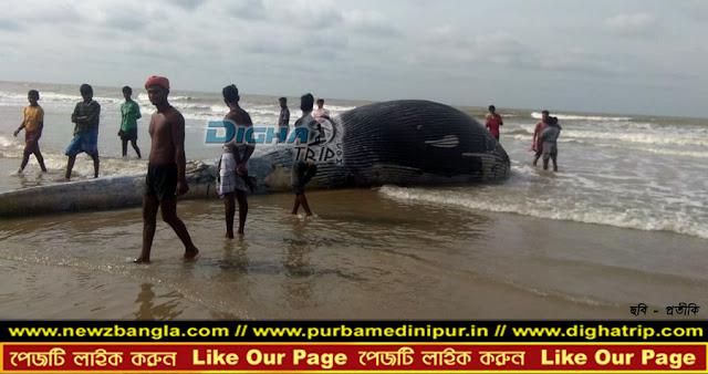 whale, digha, mondarmoni beach, dighatrip, sea whale, তিমি উদ্ধার, মন্দারমনিতে তিমি উদ্ধার, দিঘা