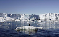 An Adelie penguin stands atop a block of melting ice near the French station at Dumont díUrville in East Antarctica in this January 23, 2010 file photo. (Credit: Reuters/Pauline Askin/Files) Click to Enlarge.