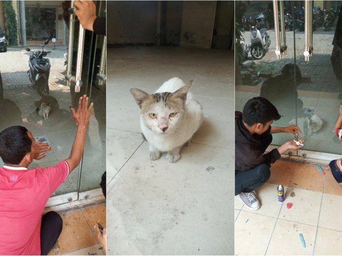 Viral, Kisah Kucing Terjebak Sendirian di Dalam Ruko yang Tutup sampai 1 Bulan, naviri.org, Naviri Magazine, naviri majalah, naviri