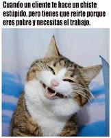sonrisa falsa humor de gatos