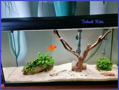 Dekorasi Aquarium ikan koki