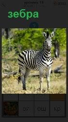 40 слов 4 на поляне стоит обыкновенная зебра 19 уровень