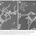 Isolado organismo que pode explicar a origem de toda a vida complexa da Terra