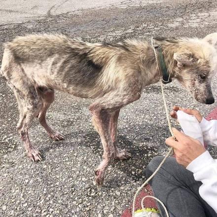 Homem tenta matar cachorro de fome para se vingar de ex-mulher