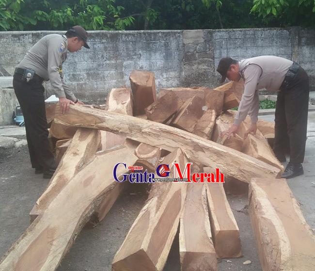 Puluhan Batang Kayu Sono Keling Ilegel Diamankan Polisi, Tak Diketahui Siapa Pemiliknya