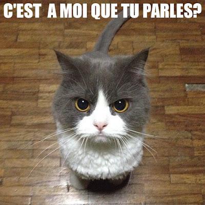 image chat avec texte drole