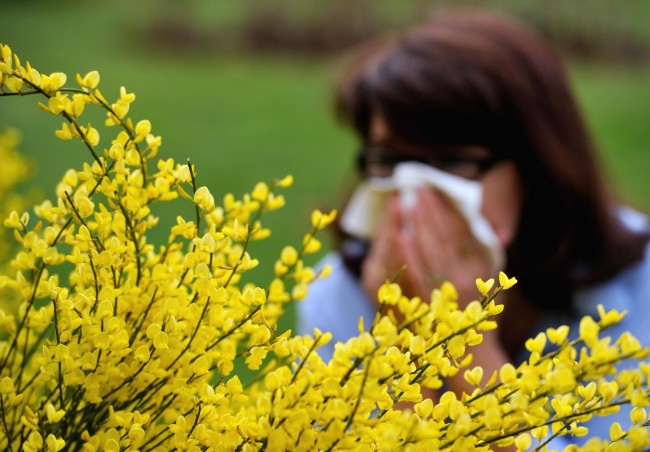 Pollen Count Hits Record High In Some Regions