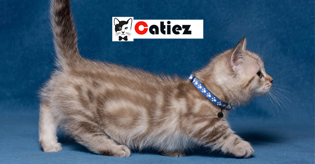 Cute Cats - What Are the Cutest Cat Breeds?