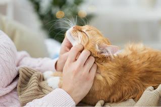 7 formas de saber que tu gato te ama