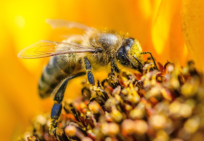 Photo of Bee by Guilherme Stecanella on Unsplash