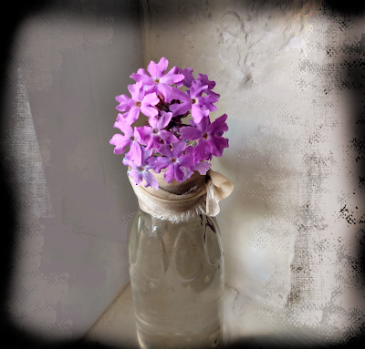 purple sand verbena in a cracker barrel maple syrup mini bottle