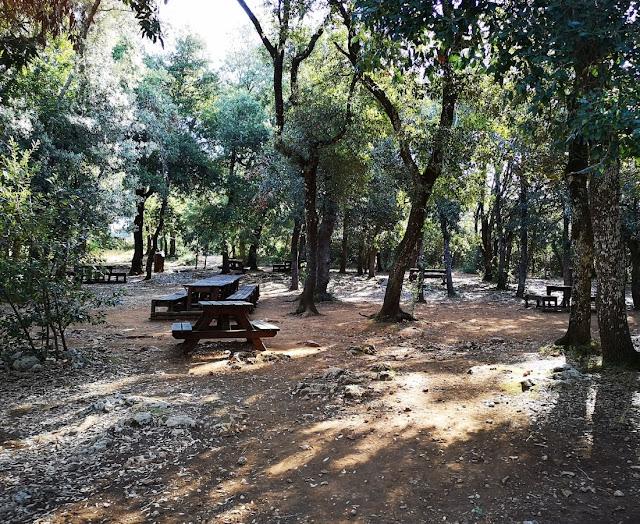 Area picnic nel bosco delle Pianelle