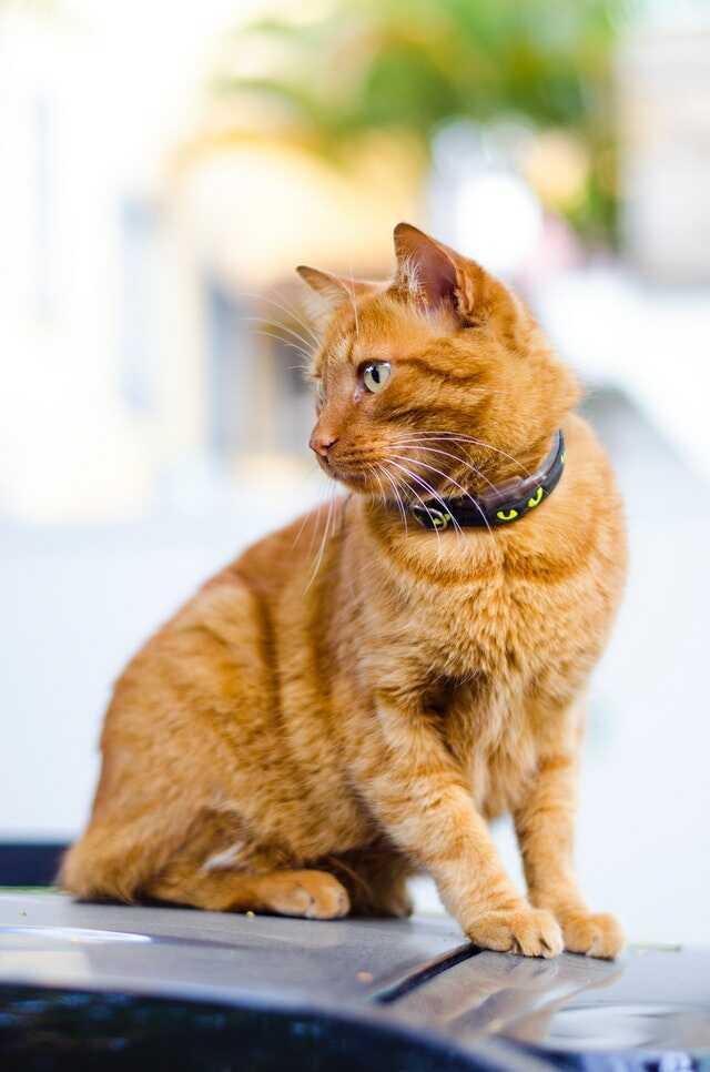 beautiful cat images