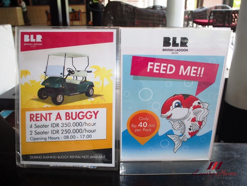 bintan lagoon resort buggy rental feed fish