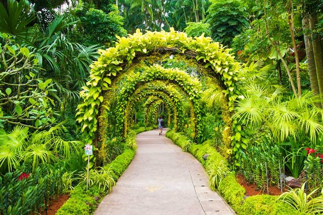 Botanic gardens e National Orchid Garden-Singapore