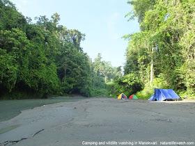 hiking, camping, riverwalk, and birdwatching tour in Manokwari