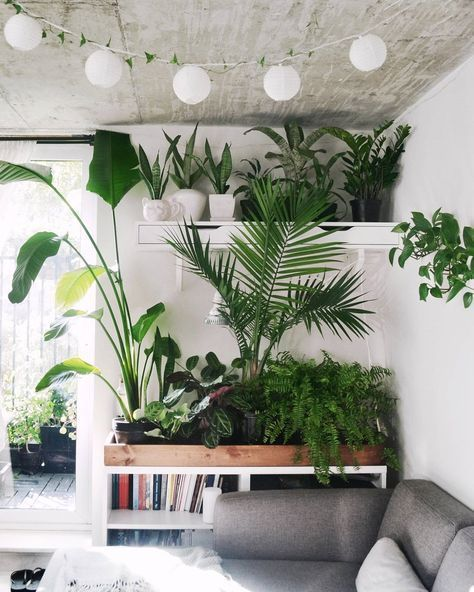 30 Chic Ideas For Home Decor With Houseplants