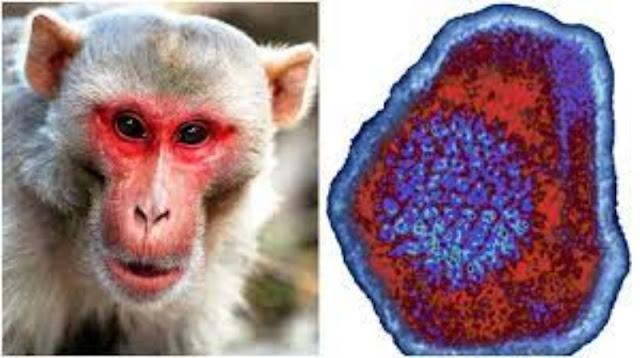 ¿Una nueva amenaza? China reporta muerte humana por 'virus del Mono B', Se espera lo peor