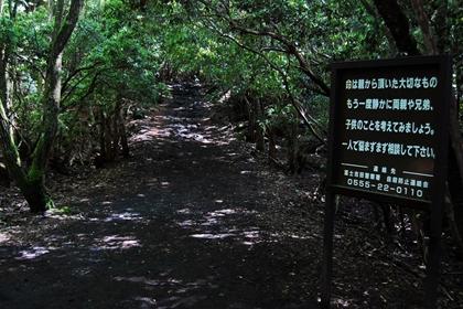 ป่าอาโอกิงาฮาระ (Aokigahara) @ www.aokigaharaforest.com