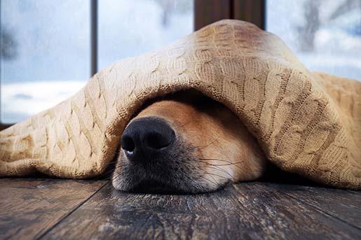 Czy pies może mieć katar?