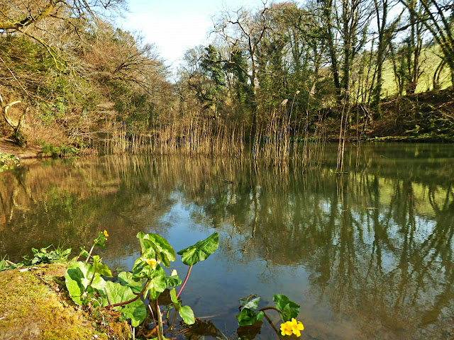 Lake at Lost Gardens of Heligan, Cornwall