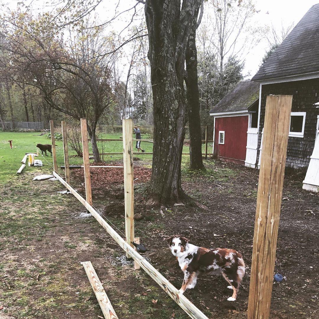 15+ DIY Cheap Dog Run Ideas Backyard for Small or Large ...
