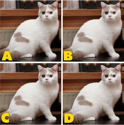 Which image is different? image 36